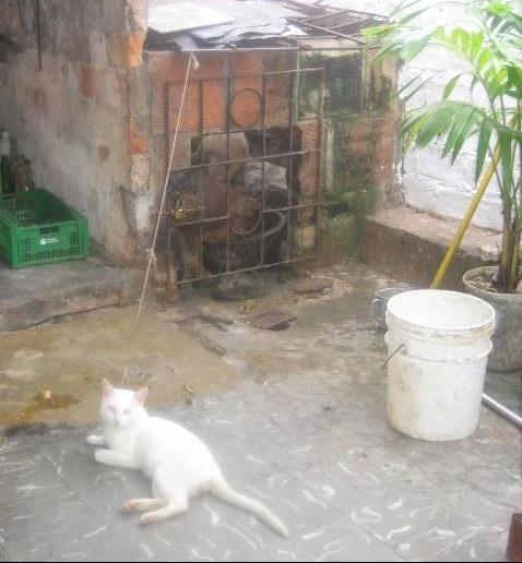 a cat, a bucket & a poor drowningturtle